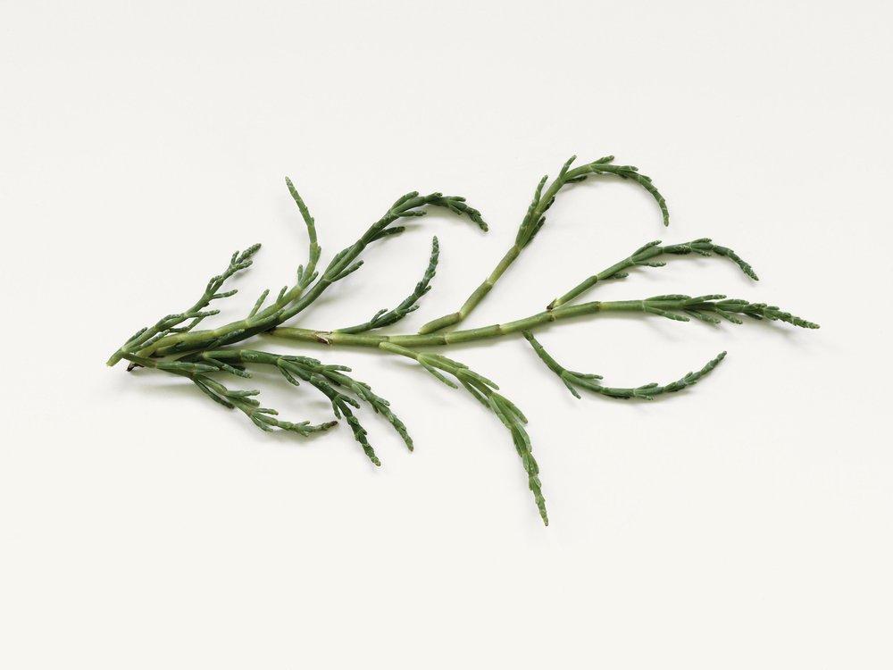 Botanical_Kinetics_ingredient_image (1).jpg
