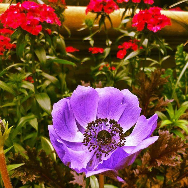#charleston #charlestonsc #sewe #flowers #charlestonplace