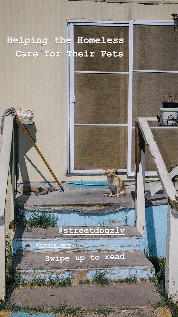 streetdogz_ig_stories_01.JPG