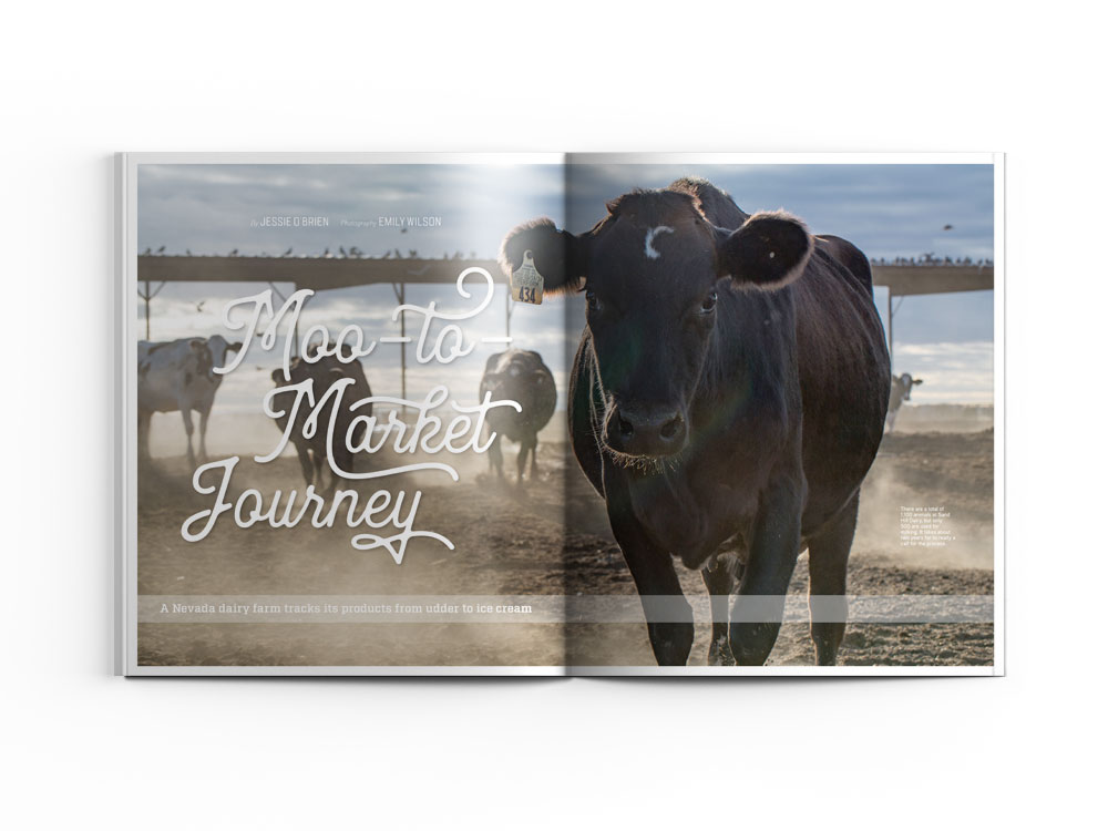 features_dairy_farmer_01_WEB.jpg