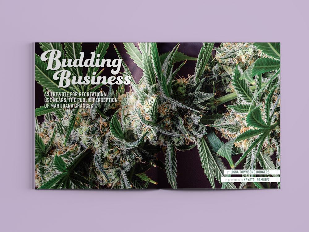 features_marijuana_01_WEB.jpg