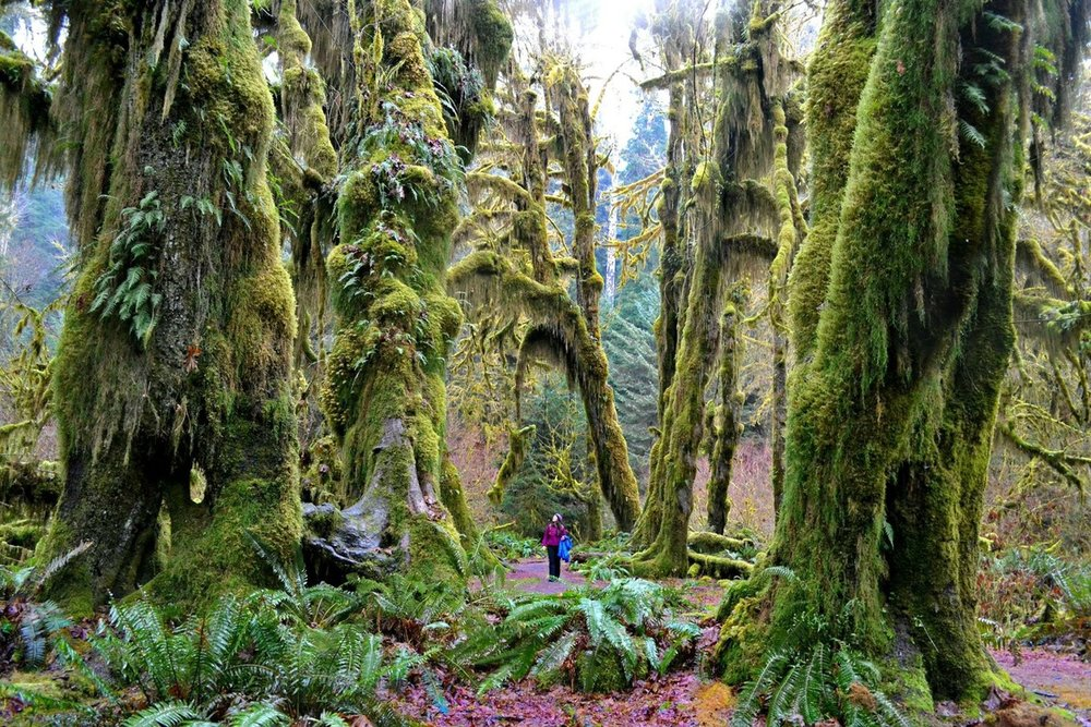 olympic national forest.jpg