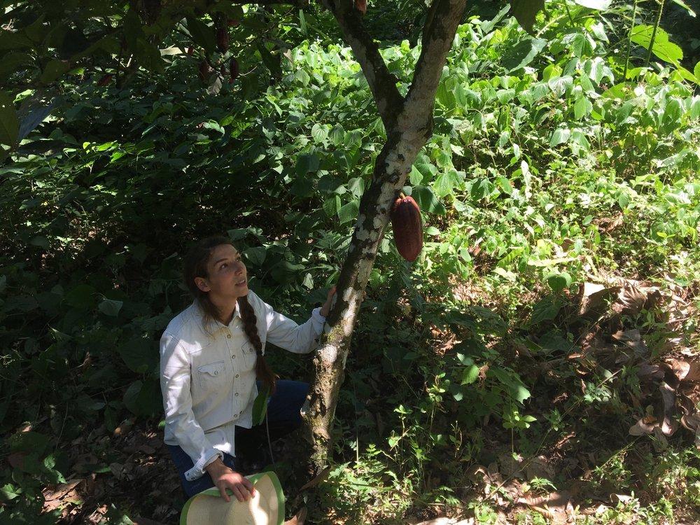 Kakaoen og jeg i Colombia ♡