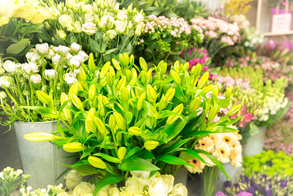 The Flowers… - We use a number of trusted suppliers to ensure that we only hold stock of the highest quality. With regular deliveries, great practice and an air-conditioned environment, we ensure that all stems are fresh and in great condition. In the modern flower industry, the majority of our fresh flowers are grown in Holland in specially designed greenhouses. As well as sourcing from Holland we also support local, British growers whenever possible and as this industry grows we hope to increase the amount of home-grown blooms in our shop. Look out for our British Flowers Week promotions every June!