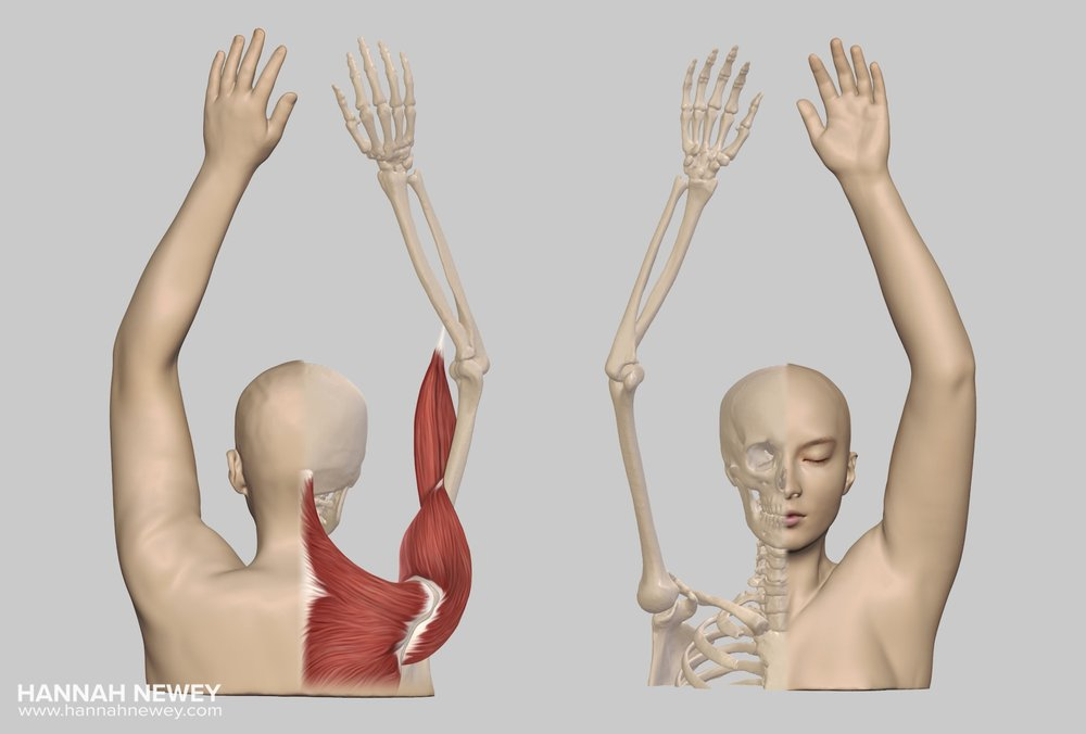 CT reconstruction muscles and skeleton_Hannah Newey.jpeg