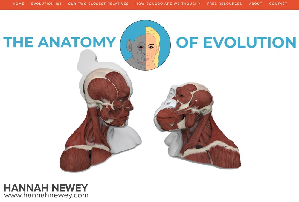 Anatomy of Evolution website homepage_Hannah Newey.jpg