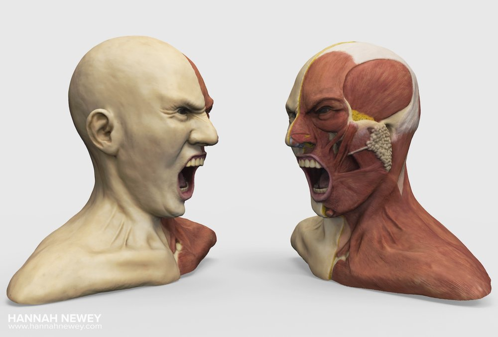 Anatomy of Rage Model_Hannah Newey