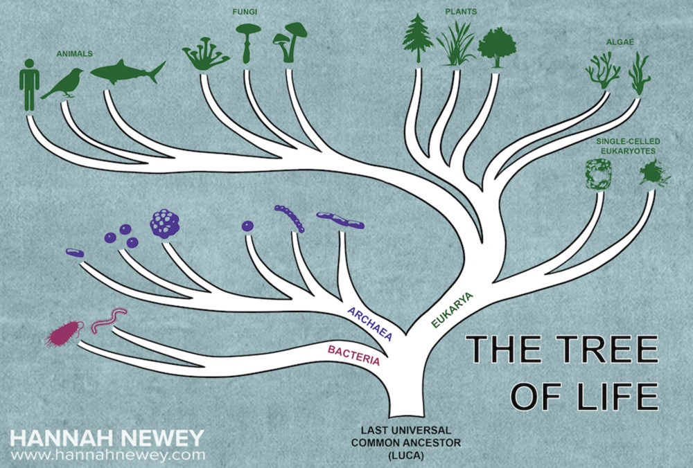 The Tree of Life_Hannah Newey