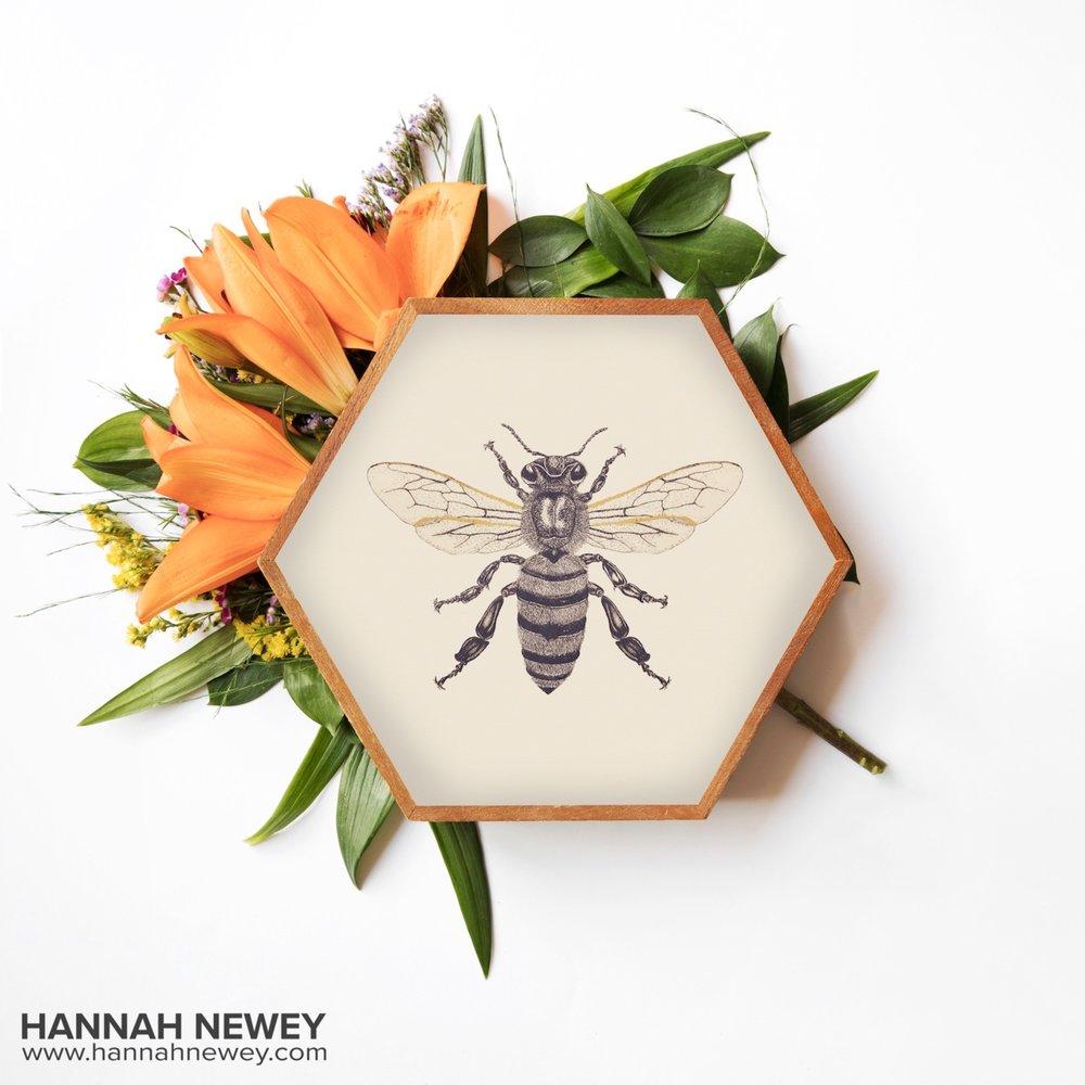 Honeybee_Hannah Newey