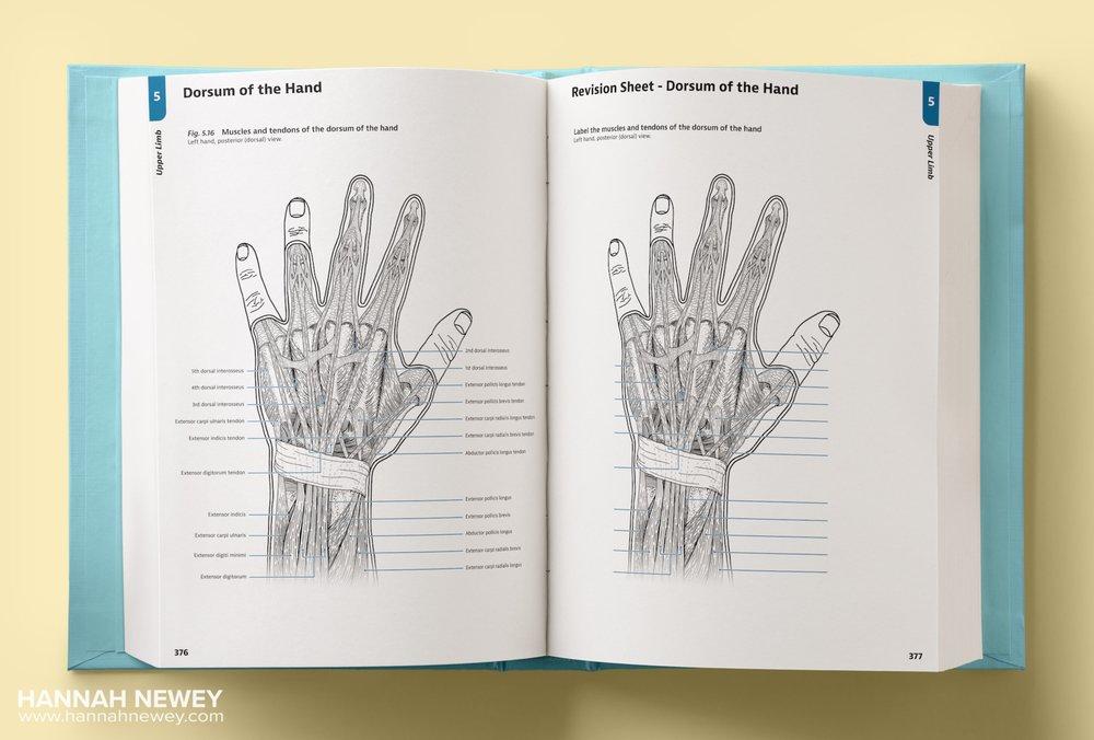 Dorsum of Hand Textbook Mockup_Hannah Newey
