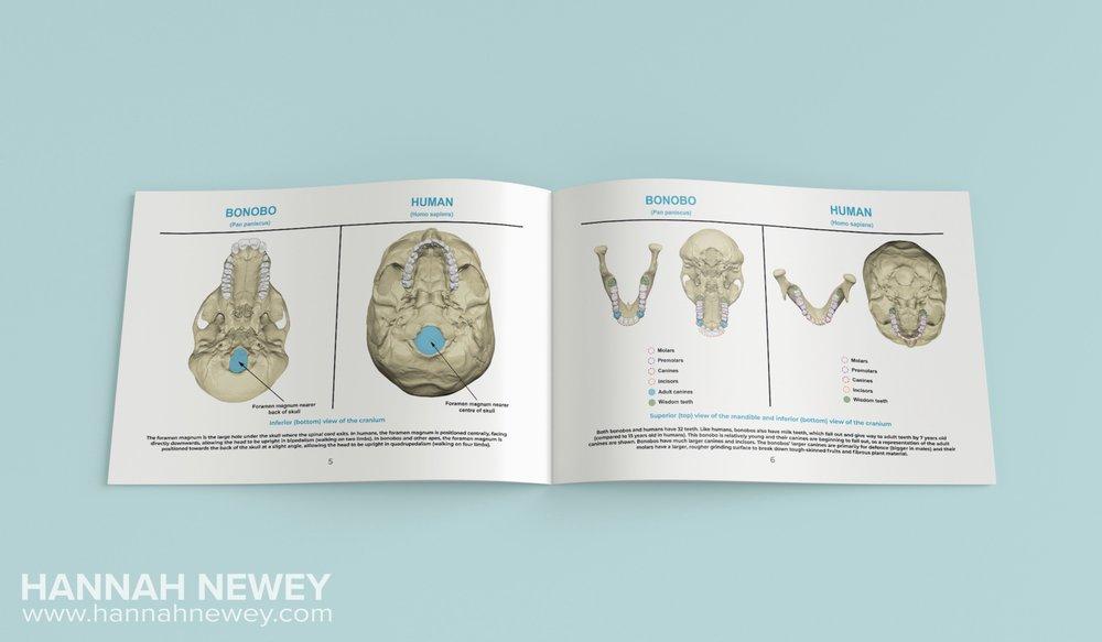 Comparative Anatomy Guide Spread_Hannah Newey