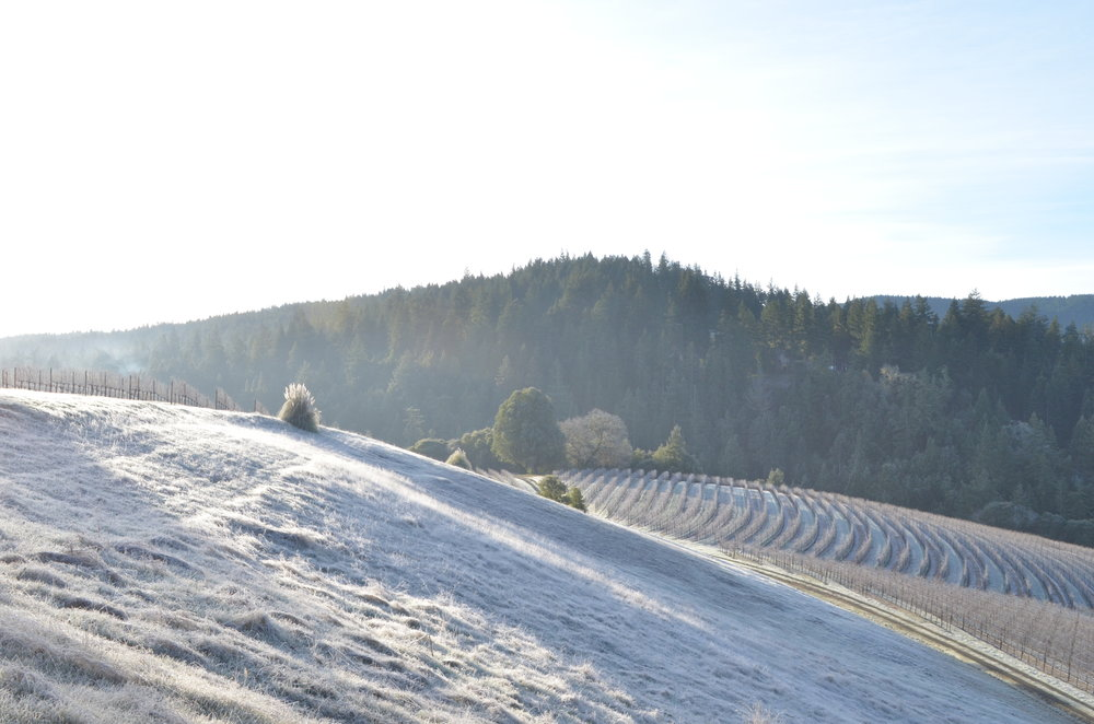 Morning sun on frost covering the neighboring hill and vineyard next to Indian Creek Inn in Anderson Valley, California.