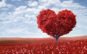 Heart+tree+photo.jpeg