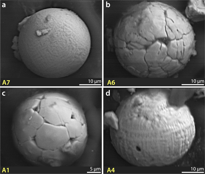 Group 5: Anthropogenic spherules. ( a – d ) SEM images of anthropogenic spherules found only in surface sediments at Pilauco. They are morphologically similar to Group 1 impact-related spherules, but SEM-EDS analyses show that these spherules are geochemically dissimilar to all other groups at Pilauco. Ternary diagram in Fig. 7a demonstrates geochemical similarity of them to known anthropogenic spherules.