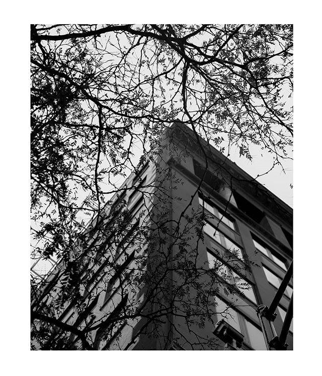 Keep lookin up . . . . . .  #rochesterinstituteoftechnology #theimaged #visualambassadors #blackandwhitephotography #guerrillaarts #artistsoninstagram #ritphoto