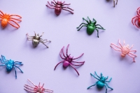 Colourful spider toys
