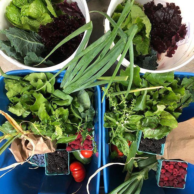 CSA week 7.  #lettuce #kale #beets #tomato #berries #onion #garlic #cabbage #radish #basil #csa #sharetheharvest #organicgardening #boringoregon #portlandoregon #oregon #pnwfarm