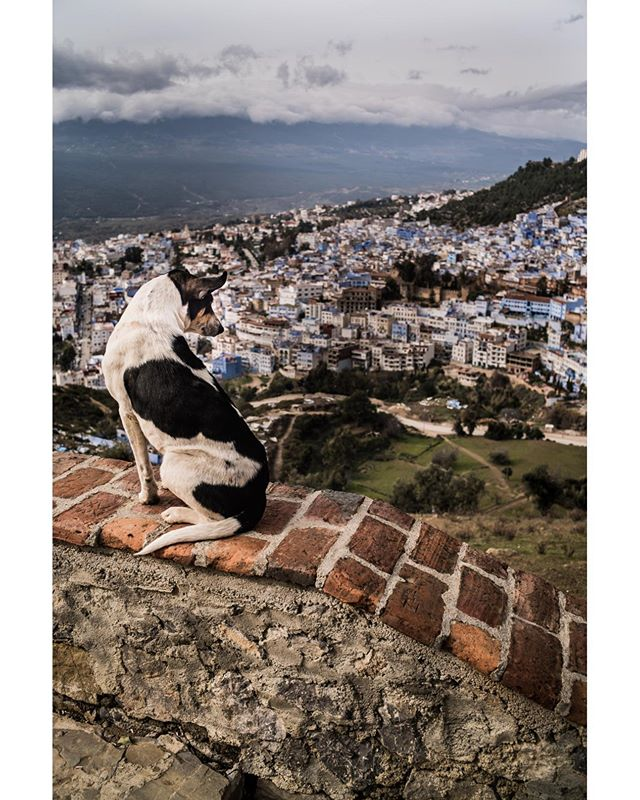 January 2018  This wonderful dog hangs out at the Spanish Mosque in Chefchaouen, hoping for love and treats from the many people who walk up to the top of mountain.  #beautiful #travel #travelphotography #Spectacular #light #phototravel #photography #Cool #Relaxing #Interesting #life #love #music #Morocco #Chefchaouen #followme #leica #followtrain #streetart #streetphotography #dog #godlove