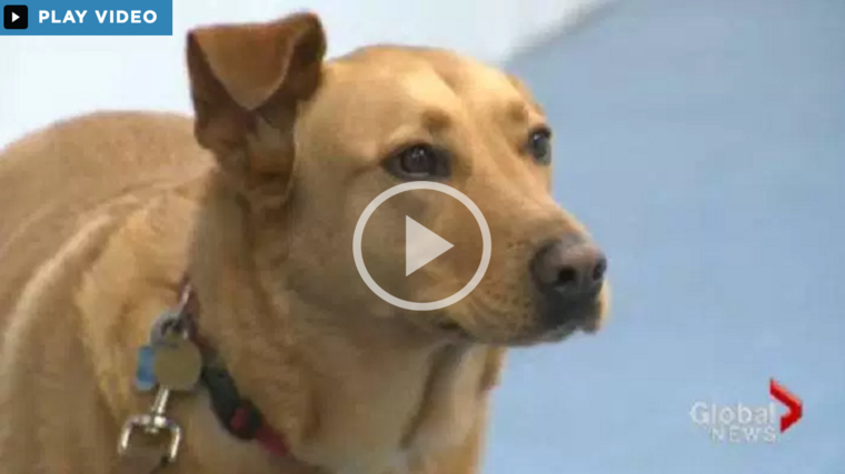 "Watch    ""Obedience school tries to establish stronger bond betweeen pet and owner""    on GlobalNews"
