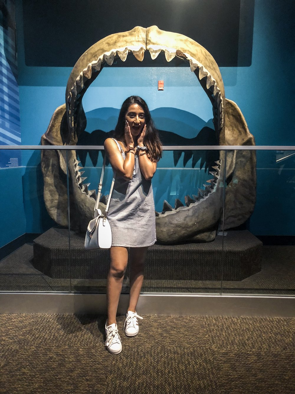 The largest shark ancestor could eat me whole!