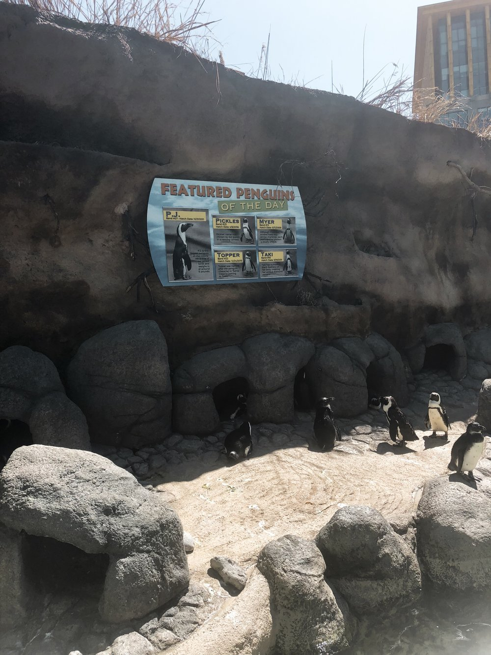 The Penguin Area is outdoors.