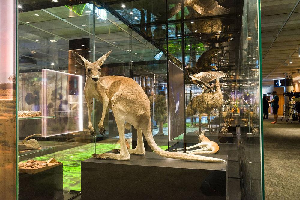 Gallery-Queensland-Museum.jpg