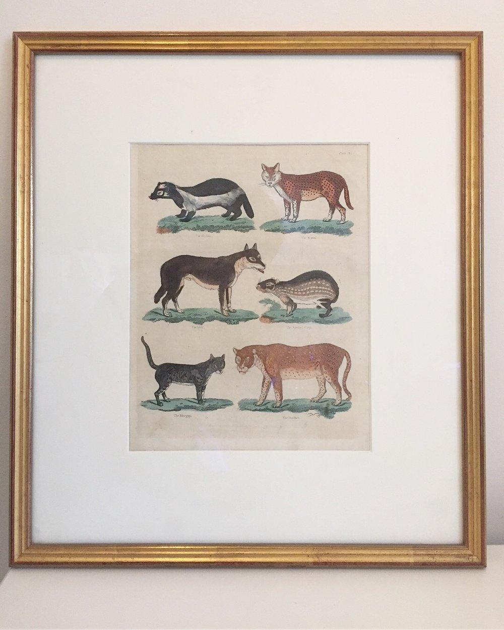 Early German engraving depicting mammals - Circa 18007.5