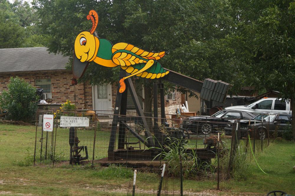 Grasshopper , George Kalesik, in backyard. Photo: Laura Napier