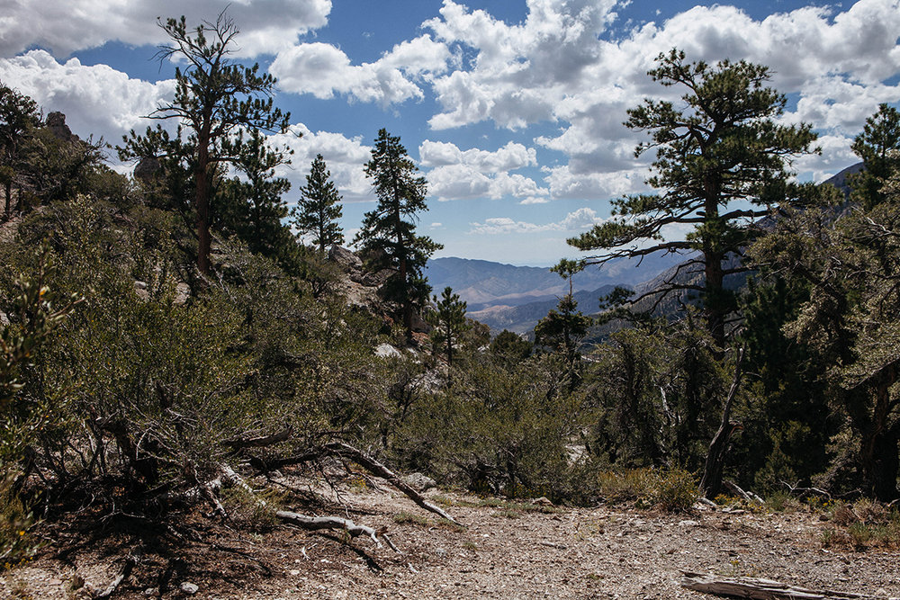 Scenic views along the North Loop Trailhead in Mt. Charleston on September 1, 2016. Photo Mikayla Whitmore
