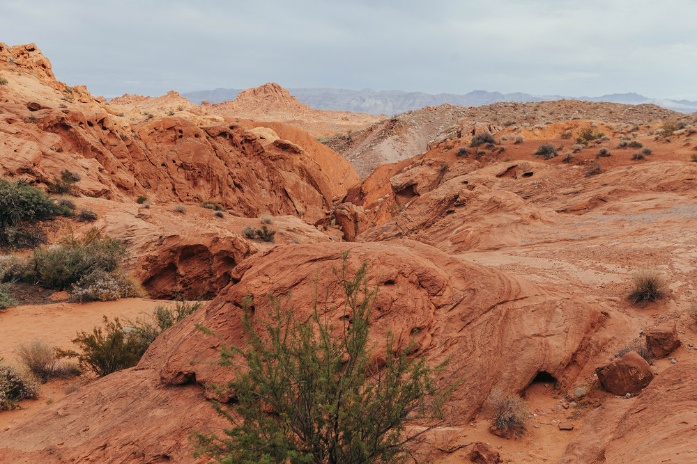 Valley of Fire. Photo Mikayla Whitmore.