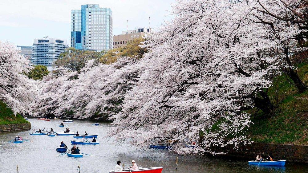 Boat Cherry Blossom Park, Tokyo