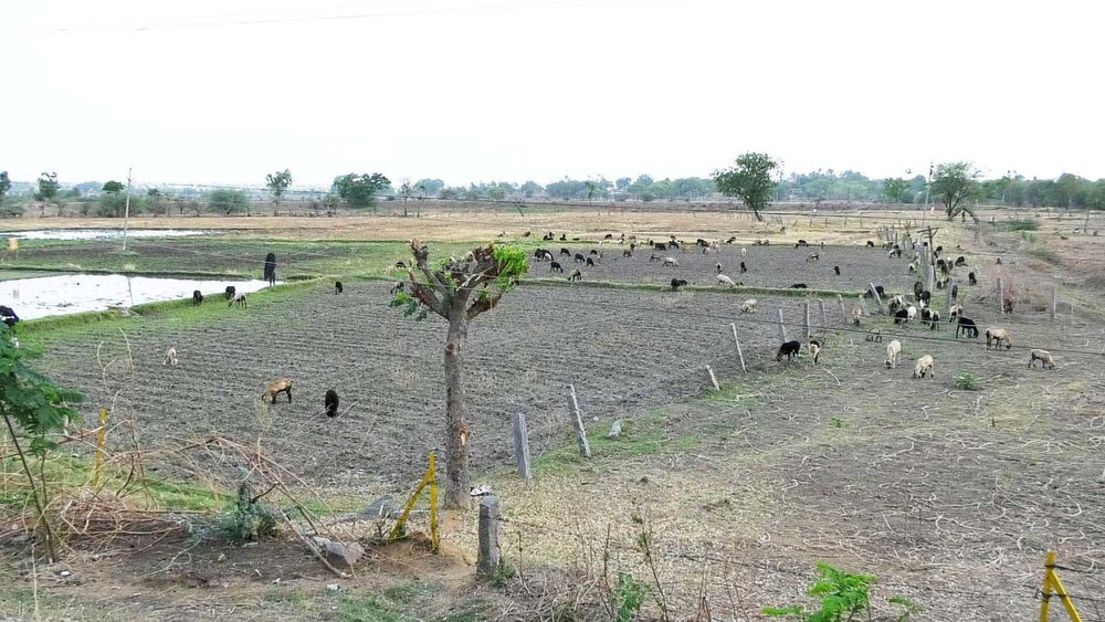 A Farm in Village