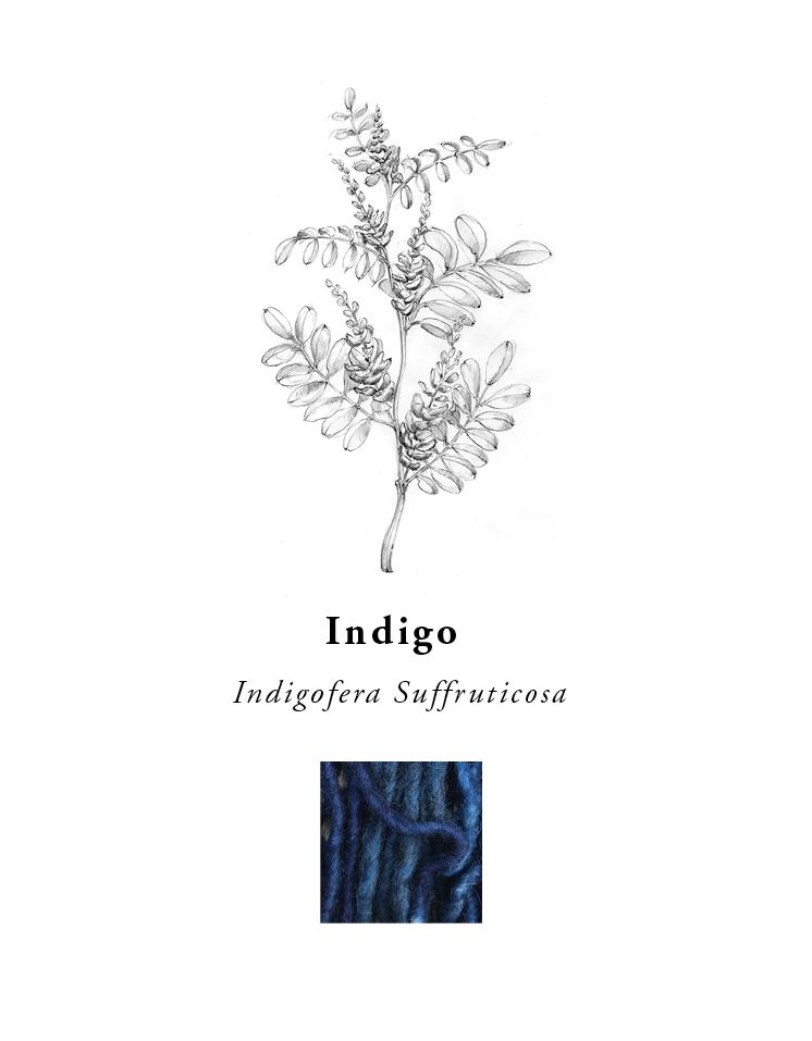 natural-dye-plants-madda-studio-Indigo.png