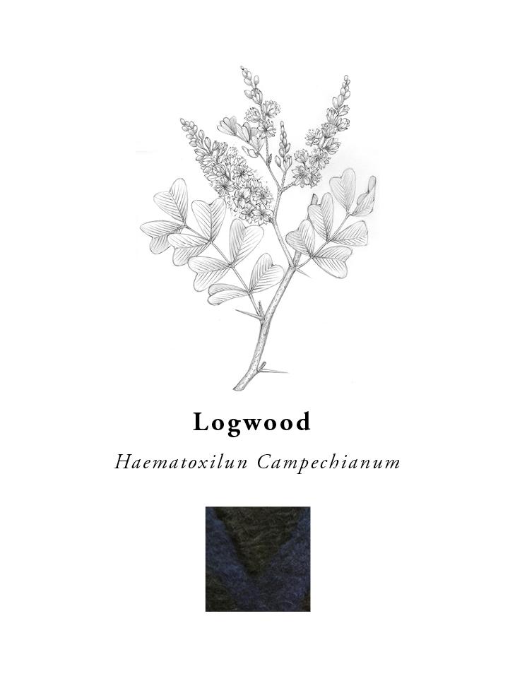 natural-dye-plants-madda-studio-Logwood.png