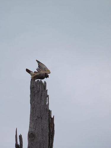 birding3.jpg