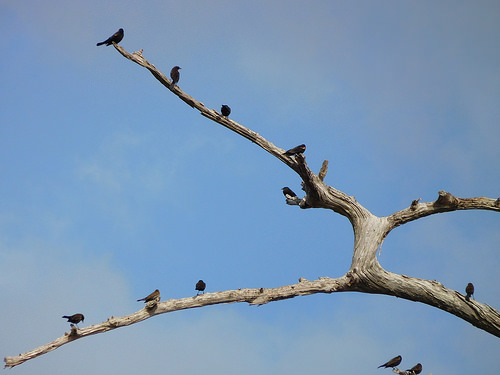 birding4.jpg