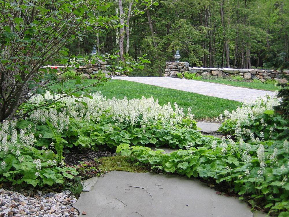 Groundcover - foamflower (2).JPG