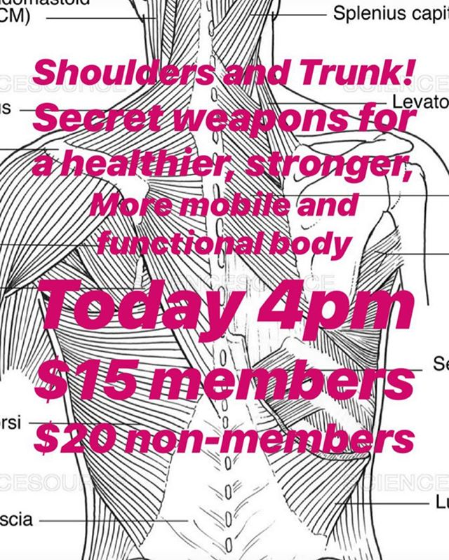 Join us today to pick up some secret weapons for higher performance in our movement prep class: shoulders and trunk edition w Dr Curtis Dodson at 4pm!