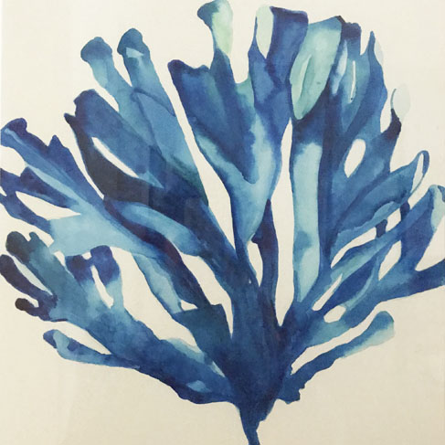 blue corral.jpg