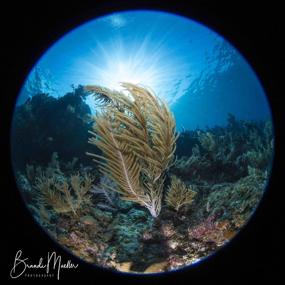 November 2-9, 2019 - Join Andrew Raak and myself for the fifth annual Roatan Underwater Photo Fest. This is a fun and exciting event for photographers of all levels where you can improve your skills while enjoying the fantastic diving of Roatan, Honduras. Each day we have 2-3 dive planned including reefs, caverns, night dives, sharks, and wrecks with evening presentations by hosts. At end of the week we hold a friendly photo competition with excellent prizes from our amazing sponsors including Ikelite, BayPhoto, Stream2Sea, NightSea, Mares, and many more.www.roatanunderwaterphotofest.com