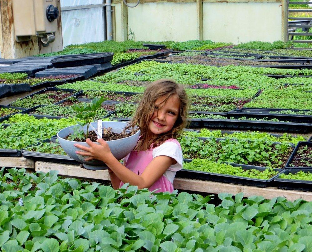 Microgreens greenhouse:young girl.jpeg