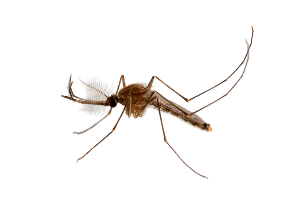 - Pest control