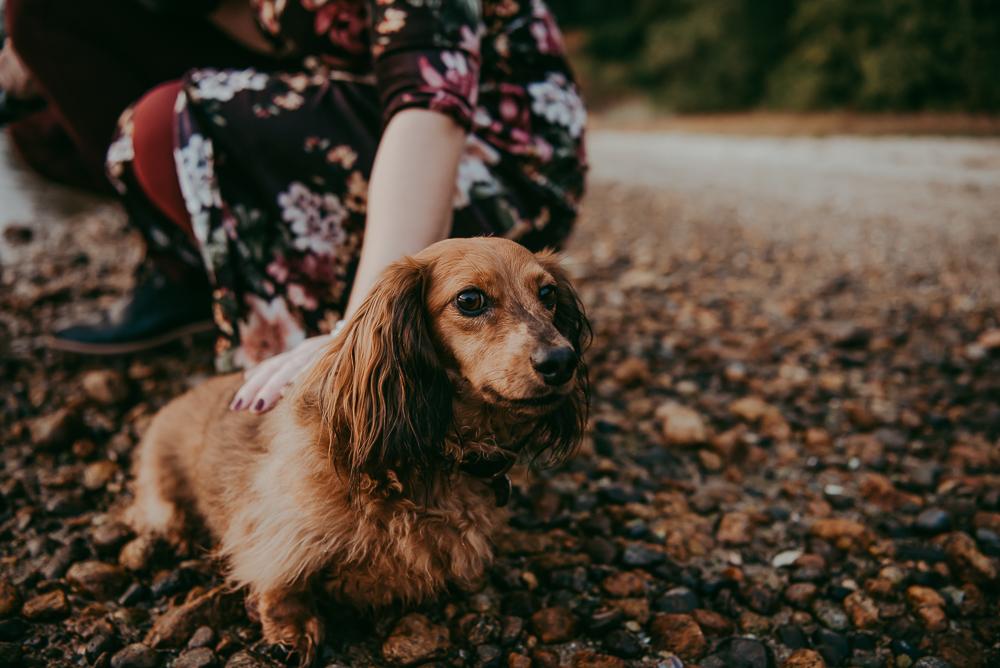 sargent-bay-family-photographer-session-Sunshine-Coast-BC-Katie-Bowen-Photography-17.jpg
