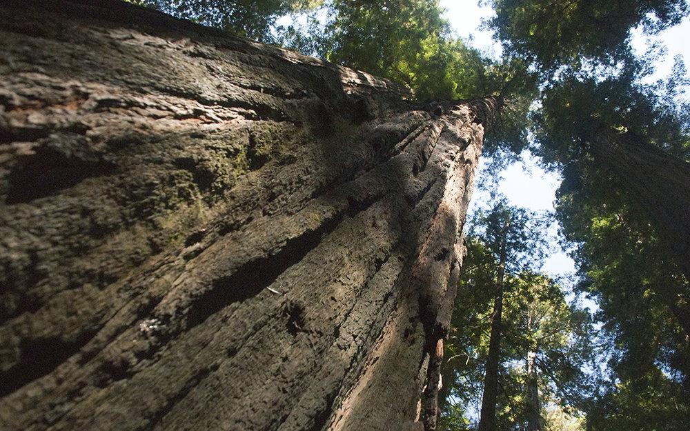 HumboltRedwoodSP_sep2010-645-10.jpg
