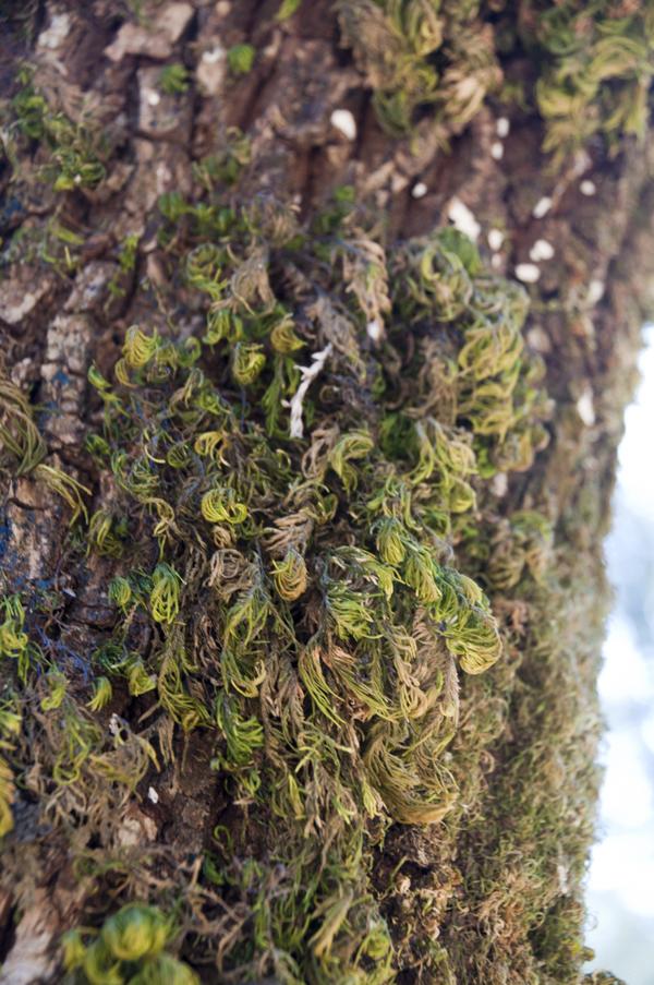 HumboldtRedwoodSPh_sep2010 (311)_600.jpg