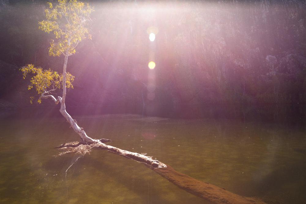 gunlom bottom pool treeLR