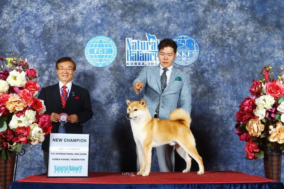 Dog_show3.jpeg