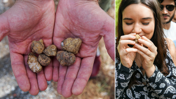 Anna loves a good truffle sniff