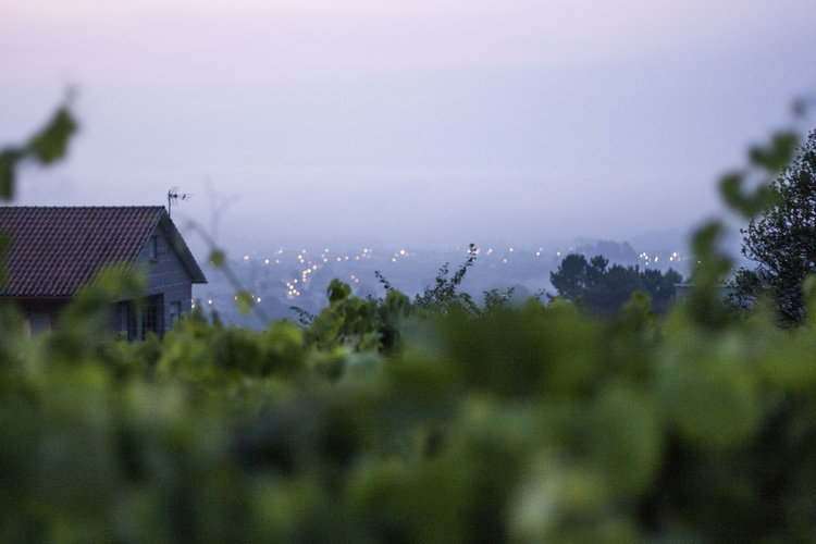 Galicia - the lush, green region in the north east of Spain. Home of Albariño, Mencía, Godello