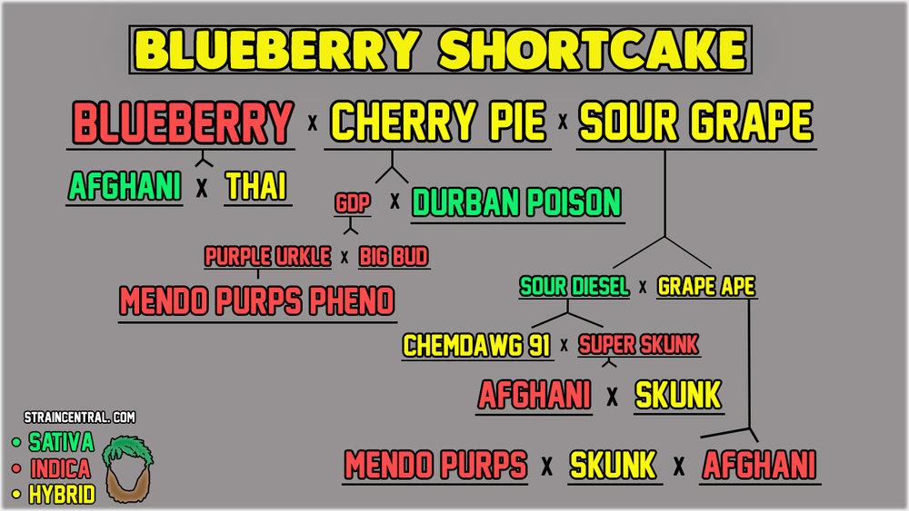blueberryshort.jpg